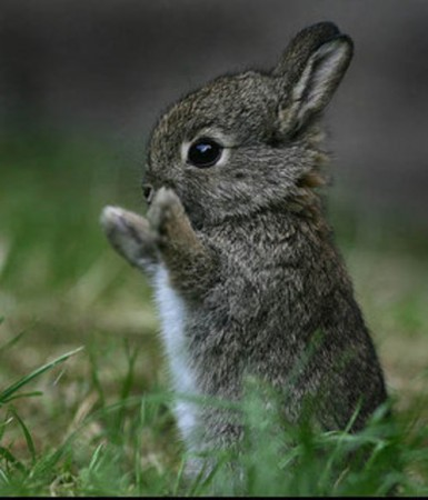 bunny new