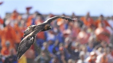 "One day I will be 83 years old, and I will have seen 2,783 photographs of Auburn's various War Eagles, and I will look at the 2,784th and still think ""Man, this is a freaking sweet photo."""