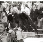 Auburn vs. Georgia 1972-19