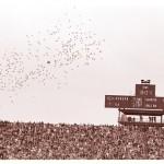 Auburn vs. Georgia 1972-3