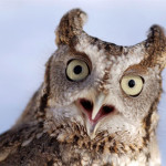 Hoot let the owls out: Raptor Center hosting release party at Keisel Park