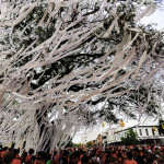 [UPDATED] Final rolling of Toomer's Oaks scheduled for April, committee doesn't see 'possibility of survival'
