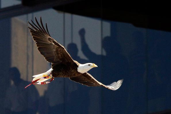 Senate Passes Resolution Celebrating American Eagle Day Recognizes