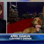 Auburn alumna's dog accidentally finishes 7th in half marathon, goes viral