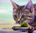 VIDEO: Hallmark Kitten Bowl features player from 'Paw-burn University'