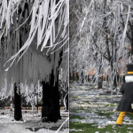 The Ol' College Ply: Does Toomer's Corner tradition have Wake Forest competition?