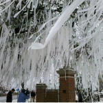 Auburn fan auctioning off Toomer's Corner toilet paper from BCS Championship celebration to raise money for Tuscaloosa