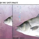 Pat Dye's Pants Talking At a Dumb Bass