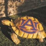 California volleyball standout commits to Auburn by painting AU logo on her African tortoise