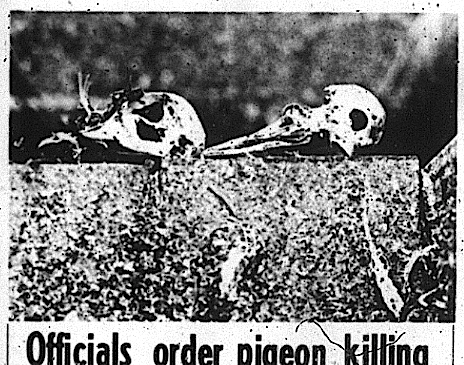 The great Auburn University pigeon extermination of 1972