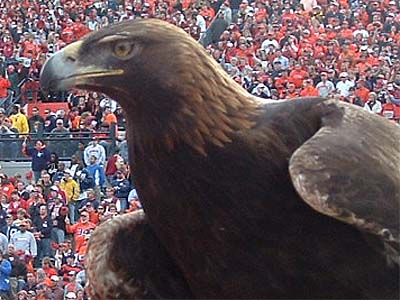 Tiger, at the 2005 Iron Bowl. She'd sacked Brodie 2.5 times.